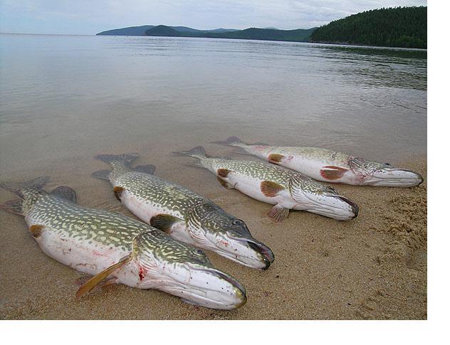 рыболов на 40 лет октября