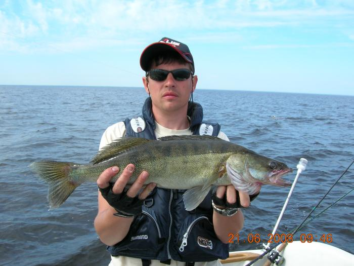 места ловли судака в рыбинске на
