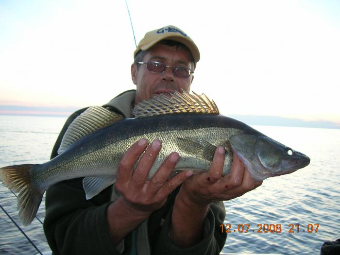 Рыбинское золото