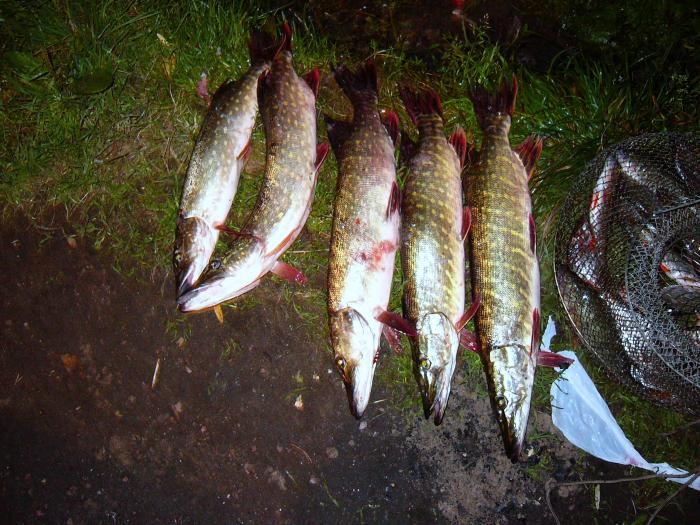 ловля рыбы финскими сетями видео