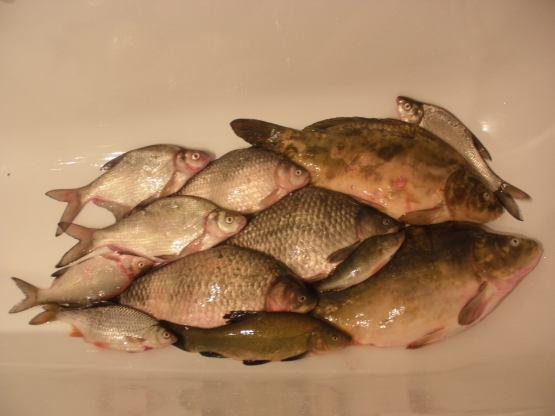 рыбалка на варенный опарыши