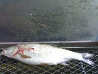 2008 2009 рыбалка охота и туризм первая