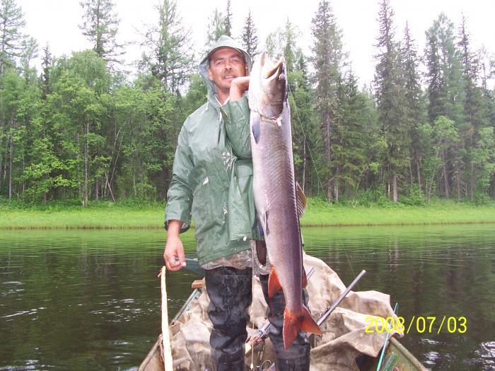 рыбалка на горной реке в иркутской области
