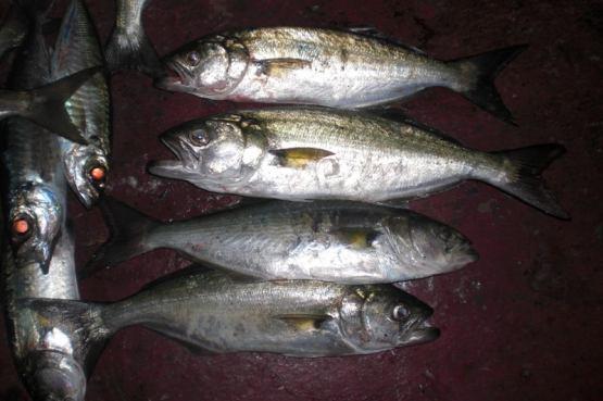 николаевский пруд пензенская область рыбалка