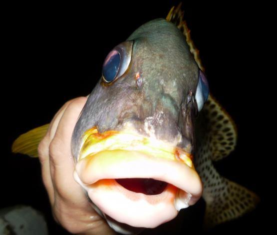 рыб снасти морда