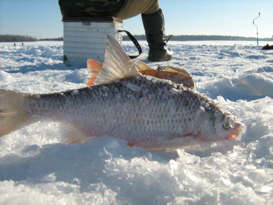 прогноз клева рыбы в пермском крае р сылва
