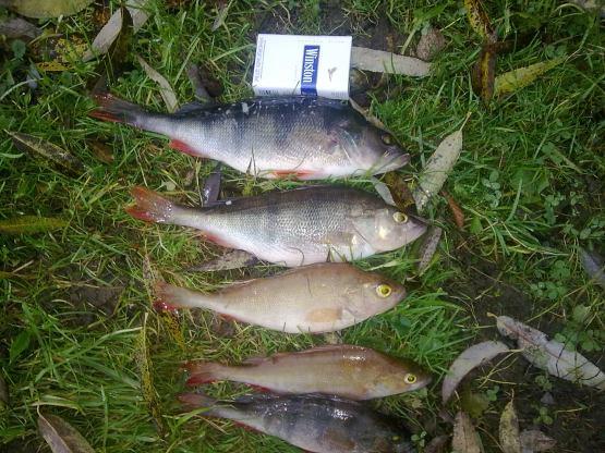 рыбалка в коломне сегодня