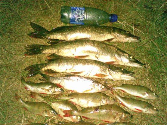 рыбалка белоомут ока фидер