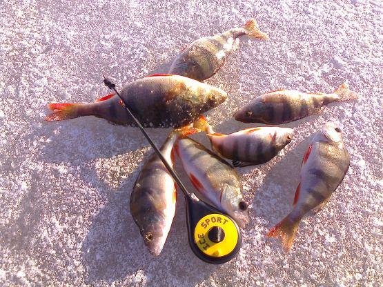 рыбалка на опарыша фото