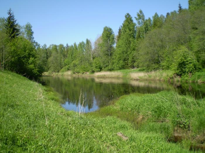 рыбалка на реке тосна видео