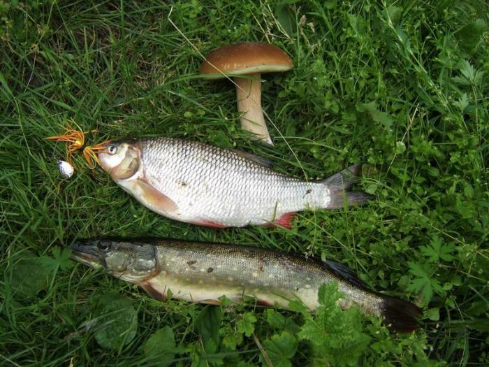 клев рыбы в орловской области