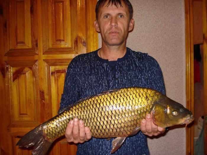рыбалка в белгородской области форум рыбаков 2016 год