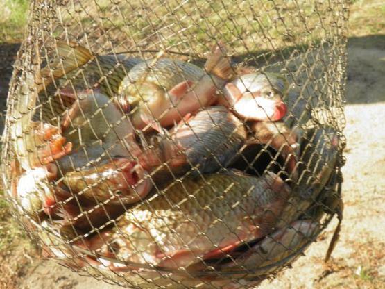 вишенки платная рыбалка