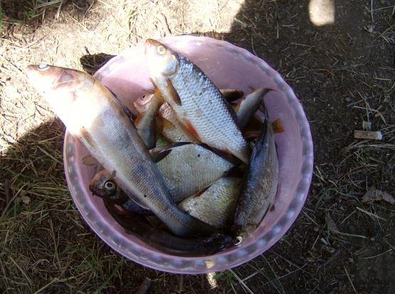 рыбалка на оке в с. елатьма