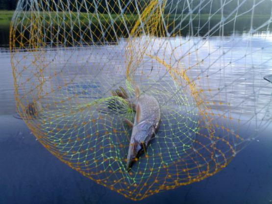 отчет о рыбалке ветлуга река