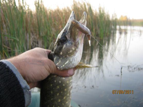 рыболовный прогноз клева в кировограде