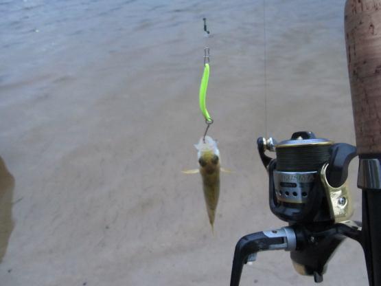 видео о ловле рыбы на ультролайтовый спиннинг видео