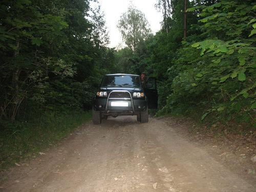 въехали в лес
